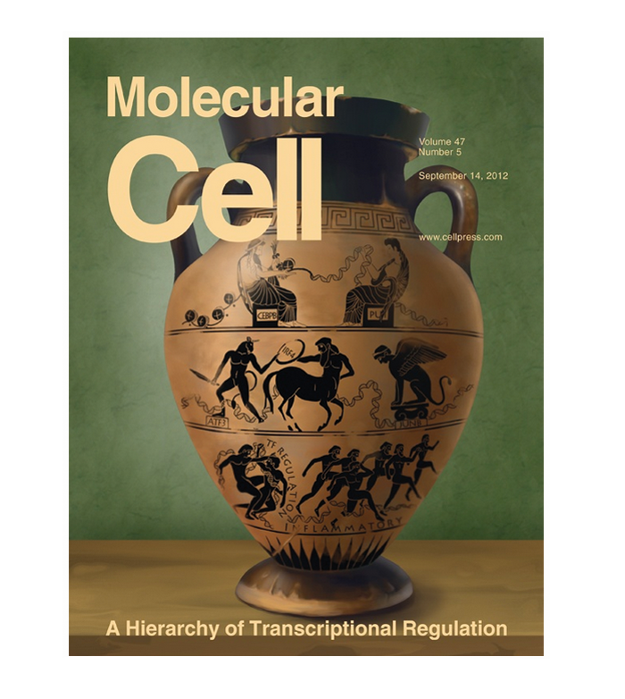Hierarchy of Transcriptional Regulations. Cover
