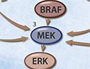 BRAF inhibitors