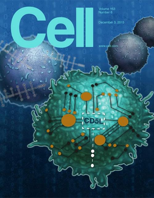 cell_Th17_pathogenicity_blog