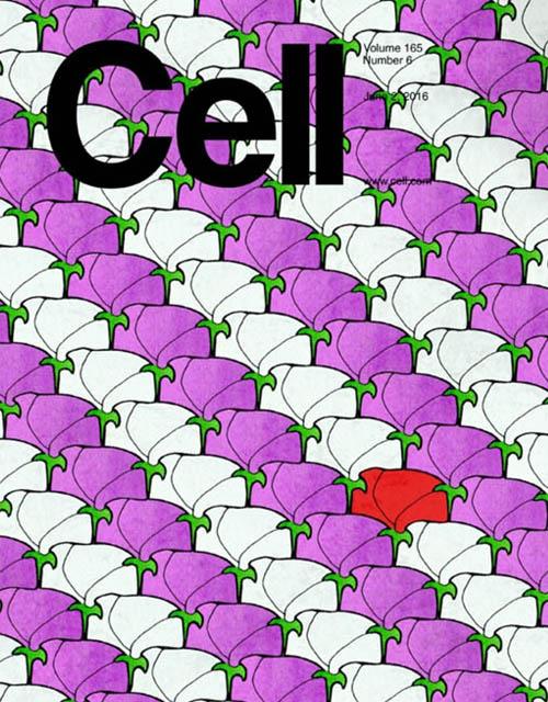 Cell cover MPRA flower